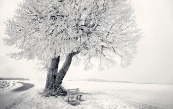 зима, снег, скамейка, дерево, мороз