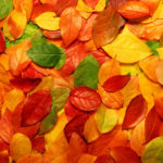 Разноцветные красивые осенние листья