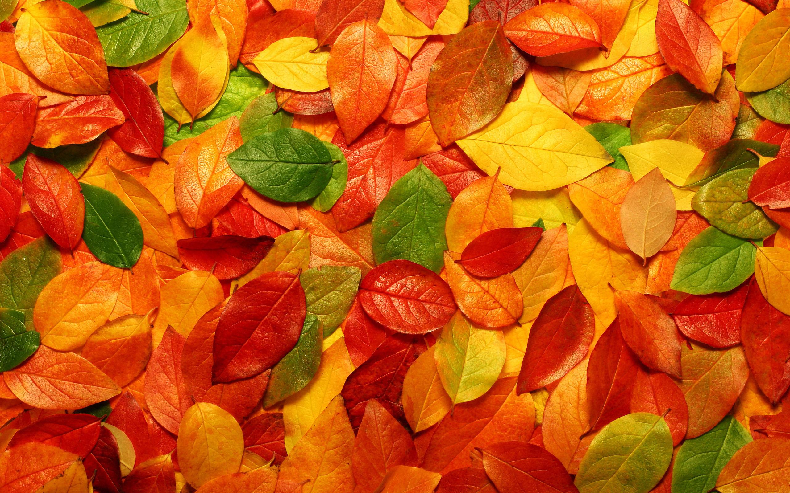 осень, листья, макро, autunm hd