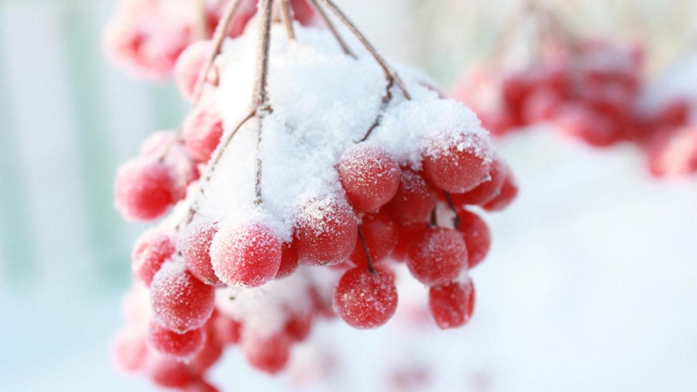 рябина зимой, макро, картинки, снег, зима