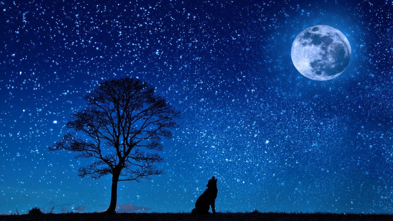 обои волк, луна, вой, животные, хищник, 4k