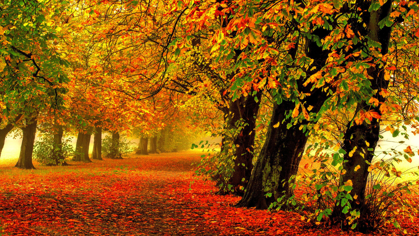 Осень, природа, желтые яркие листья, 4к