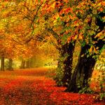 Желтые яркие листья осенью
