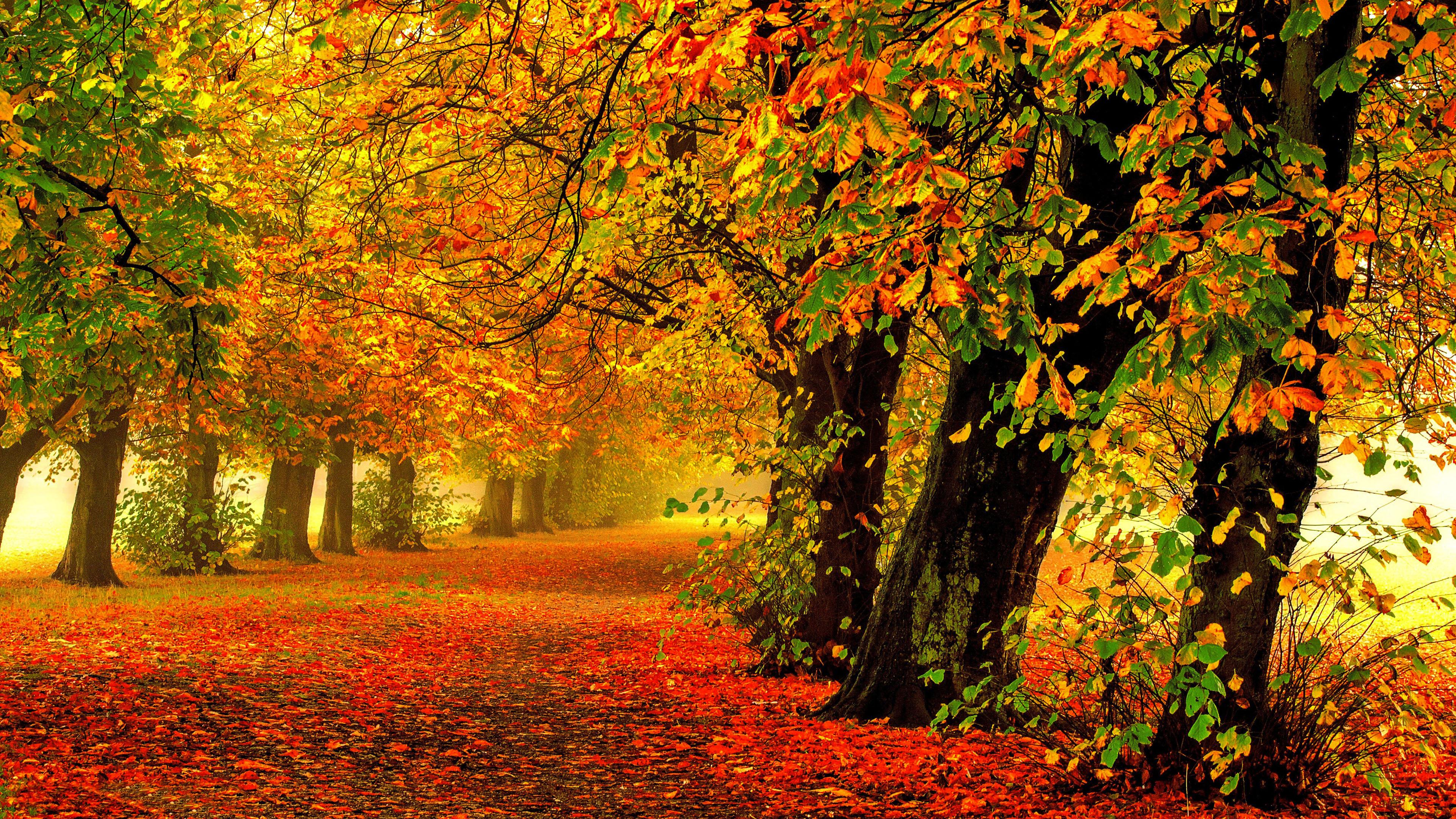 Осень, природа, желтые яркие листья, 4к обои, autumn