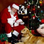 Дед Мороз с животными