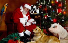 Дед Мороз, Рождество, Новый Год, санта, животные, full hd обои