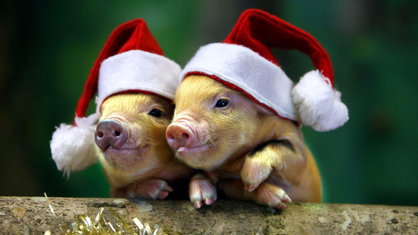Новый год, год розовой свиньи, обои hd