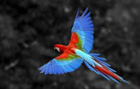 птицы, попугай Ара, животные, birds, macaw parrot, animals