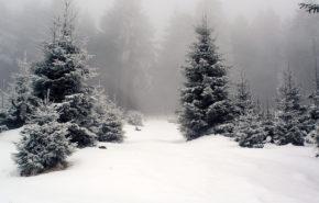 зима, снег, туман, лес, елки, обои hd природа