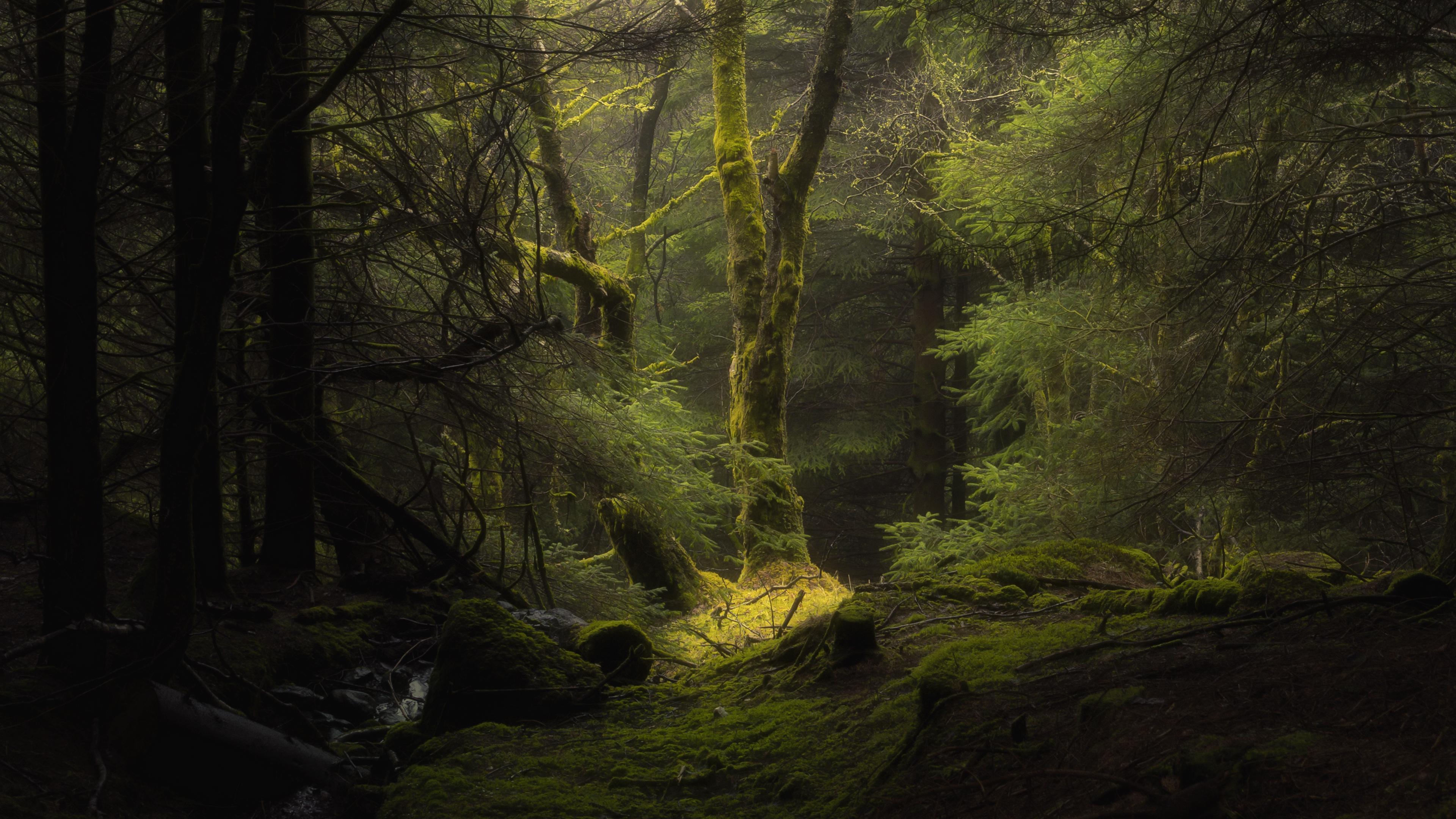 лес, туман, деревья, ветки, мох, 4k обои