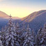Заснеженные ели зимой в горах