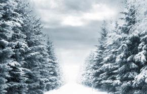 Обои зима, снег, аллея, природа, мрачно, обои full hd