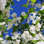 Цветущие ветки весной