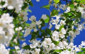 весна, ветка, цветок, дерево, hd обои