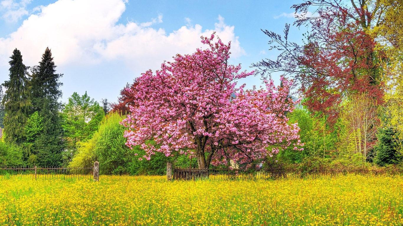 весенние обои, весна, дерево, куст, цветок, поле, забор