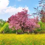Цветущий куст в поле весной