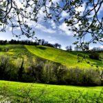 Красивая весенняя поляна