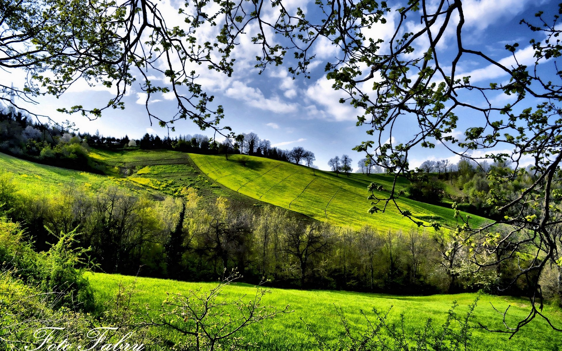 весна, поля, деревья, зелень, обои hd