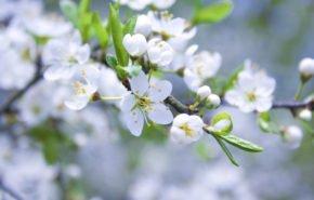 Весна, весеннее пробуждение обои, цветение, обои hd