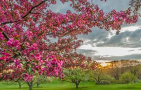 весна, цветущий сад, весенний сад, обои full hd