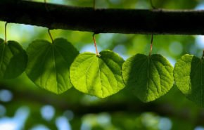 весна, листья, ветка, hd обои