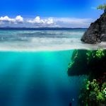 Подводный мир в море