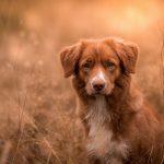 Собака в Поле, фон коричневый