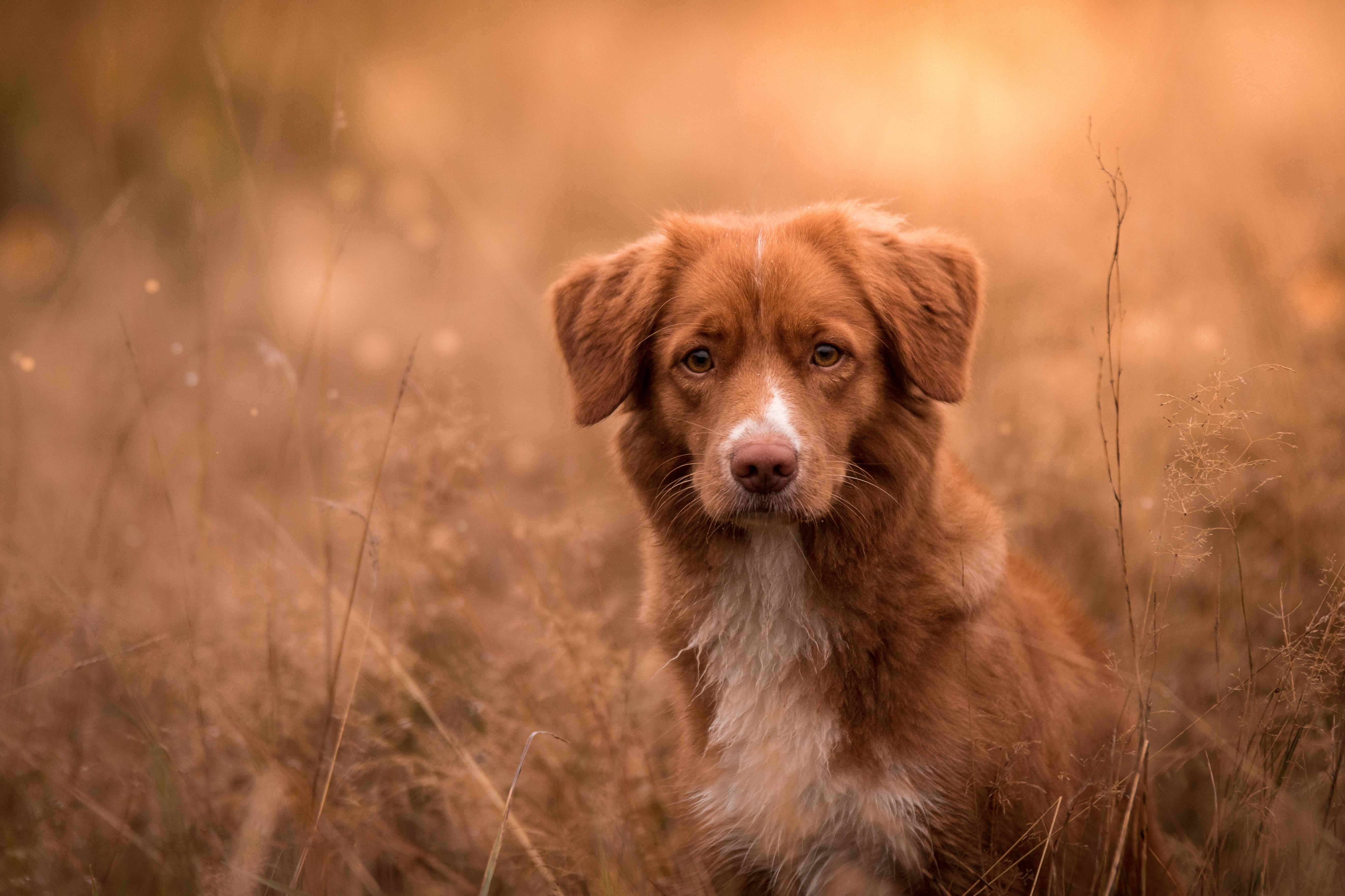 Очень Красивая Собака