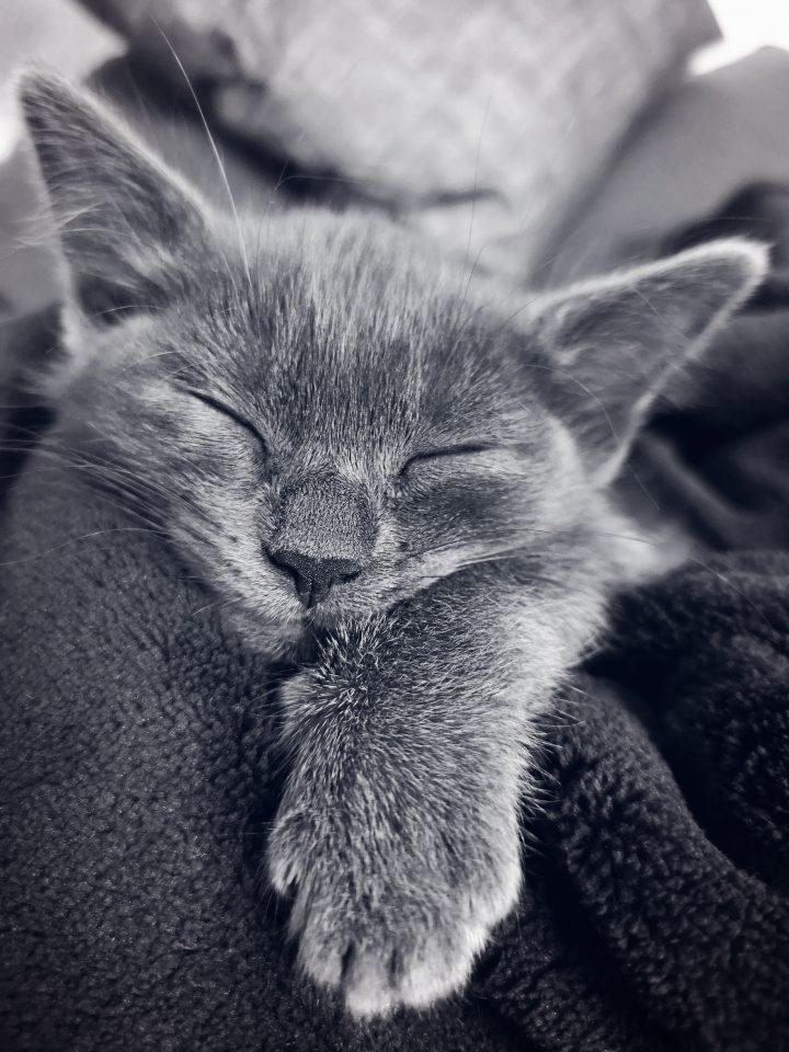 Фото кота, спящий котик