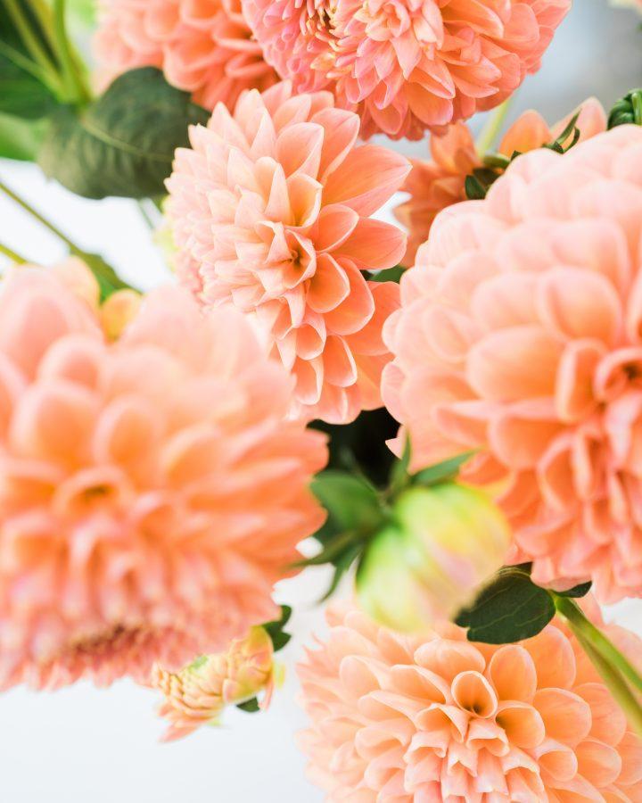 Цветы обои на заставку телефона
