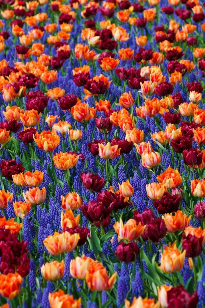 Заставка цветов на телефон