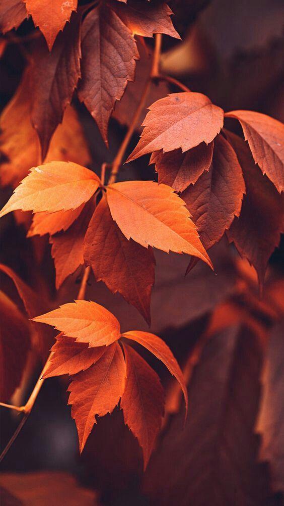 осень листья фото скачать