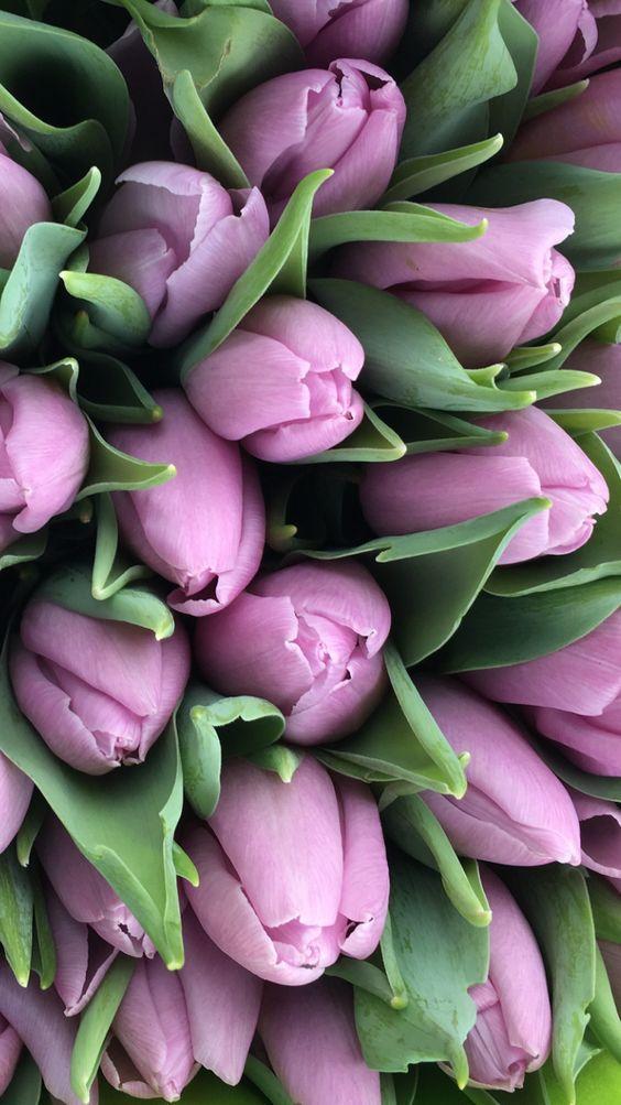 фото цветов тема 8 марта, картинки цветов