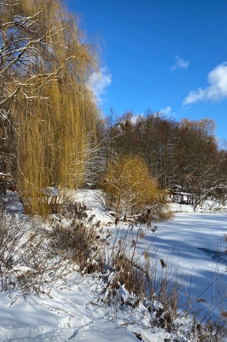 Красивый зимний пейзаж